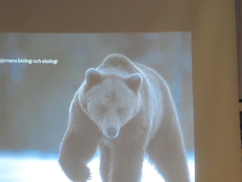 björnenens biologi nattavaaara lapland sweden